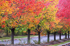 Row of autumn trees Royalty Free Stock Image