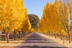 Row of Autumn Trees, Empty Road Stock Photo