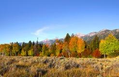 Row of autumn trees Stock Image