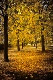 Row of Autumnal trees royalty free stock photos