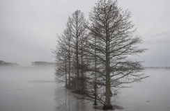 Row of Bald Cypress Trees in Ice and Fog. At Stumpy Lake in Virginia Beach, Virginia Royalty Free Stock Photography
