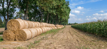 Row of bales of straw next to a corn field Royalty Free Stock Photos