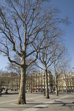 Row of bare trees Stock Images