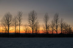 Row of bare trees against winter sunset sky Royalty Free Stock Image