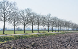Row of bare trees along a country road Stock Photo
