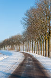 Row of bare trees besides a country road in winter Stock Photography