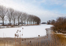 Row of bare trees besides an icy river Royalty Free Stock Images