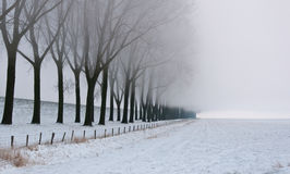 Row of bare trees in morning mist Royalty Free Stock Images