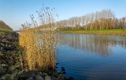 Row of bare trees reflected in the water surface Stock Photos