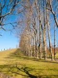 Row of bare trees and their shadows in the park. Fontiñas, Santiago de Compostela, A Coruña, Galicia, northwest of Spain, Europe Royalty Free Stock Photos