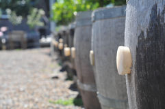 Row of barrels with cork act as planters Stock Photos