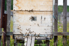 A row of bee hives in a field. The beekeeper in the field of flowers. Hives in an apiary with bees flying to the landing boards in Royalty Free Stock Photography
