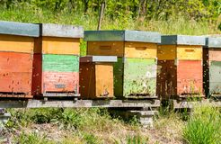 Row of beehive boxes in a apiary with bees flying. In the farm stock photography