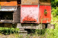 Row of beehive boxes in a apiary with bees flying. In the farm stock image