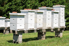 Row of beehives Royalty Free Stock Photo