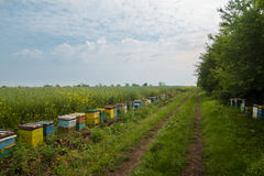 Row of beehives in a field Stock Photo