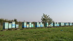 Row of beehives on the pasture. Production of honey stock video
