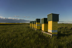 Row of beehives Royalty Free Stock Images