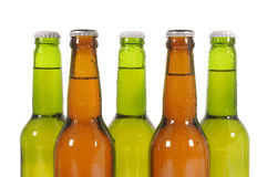 Row of cold green and brown lager pilsner beer bottles isolated on white background Royalty Free Stock Image