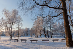 A Row of benches Royalty Free Stock Photography