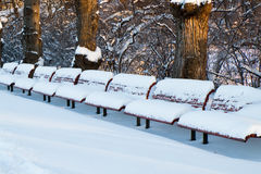 Row of benches covered in snow Royalty Free Stock Photography