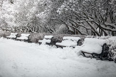 Row of benches at park covered in snow Stock Photography
