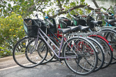Row of Bicycle rentals Royalty Free Stock Photos