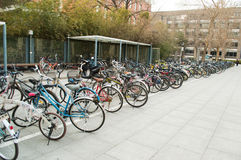 Row of bicycles. University in Beijing, China, the bicycle is the main means of transport students Royalty Free Stock Photography