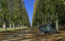 Row of bikes in the Versailles gardens Stock Images