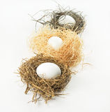 Row of Bird Nests with Eggs Royalty Free Stock Photography