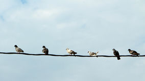 Row of birds. Birds sitting and resting on electric wires Royalty Free Stock Photos
