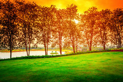 Row of black trees on sunset Stock Photo