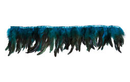 Row of blue decorative feathers Royalty Free Stock Images