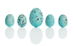 Row Of Blue Eggs. Row of blue speckled Easter eggs with drop shadow royalty free stock image