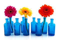 Row blue glass vases with colorful Gerber Royalty Free Stock Photography