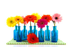 Row blue glass vases with colorful Gerber Stock Photography