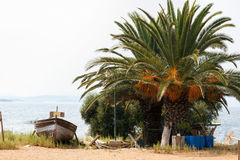 Row boat near a green palm on a seashore. Stock Photos