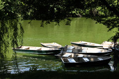 Row boats in the park. Row boats in the sunshine moored on a lake viewed from behind shadowy trees Royalty Free Stock Images