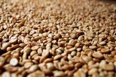 Row Boffee Beans Stock Photo