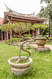 Row of bonsai trees outside Chinese temple Stock Photo