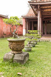Row of bonsai trees  outside temple Royalty Free Stock Photography