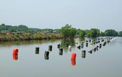 Row of buoys in aquatic farm Stock Image