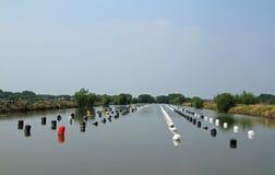 Row of buoys in aquatic farm Royalty Free Stock Photo