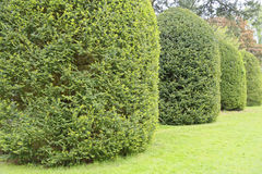 Row of bushes Royalty Free Stock Photos