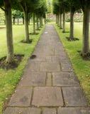 A row of bushy green trees lining a straight paved path. In Haddington, East Lothian, Scotland Stock Photo