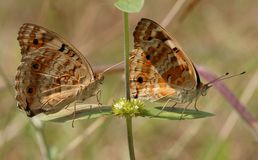 Row of Butterflies Stock Photos
