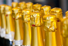 Row of champagne bottles Royalty Free Stock Image