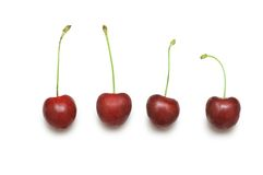 Row of cherries isolated Stock Photography