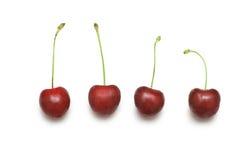 Row of cherries isolated Stock Photography