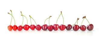 row of cherries Stock Photography